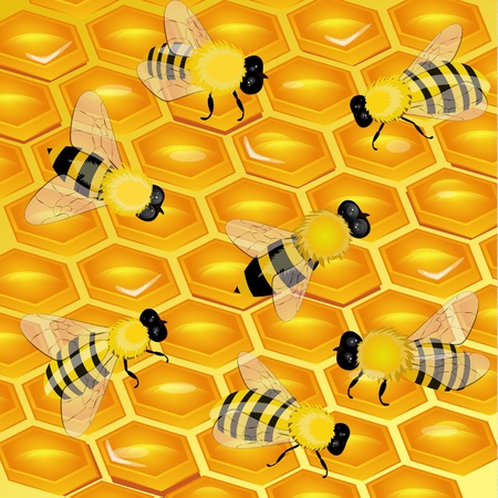 honeycomb with bees Vector