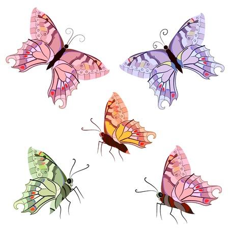 graceful tropical butterflies Vector
