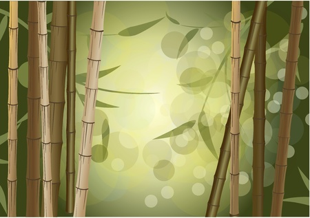 bamboo frame: background bamboo thickets Illustration