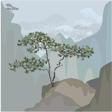 calmness: Tree on a mountain ledge