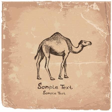 camel art drawing