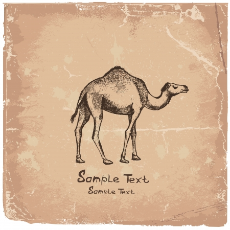 camel art drawing Vector