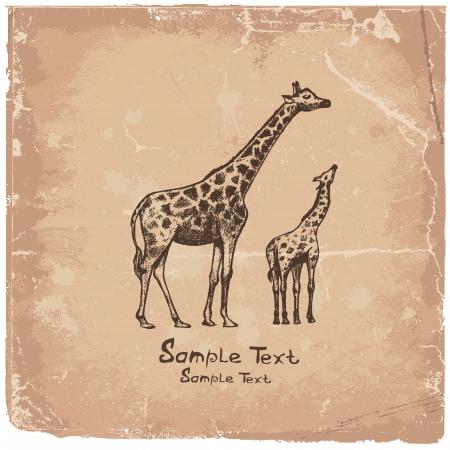 picture Giraffe Art Stock Vector - 14825918