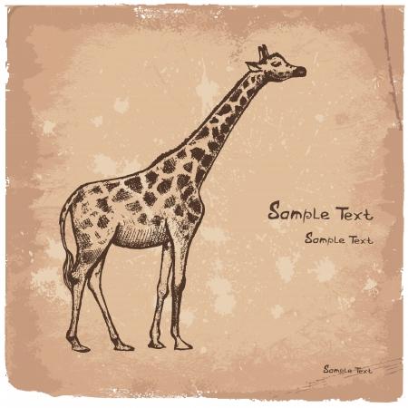 picture Giraffe Art Stock Vector - 14825915