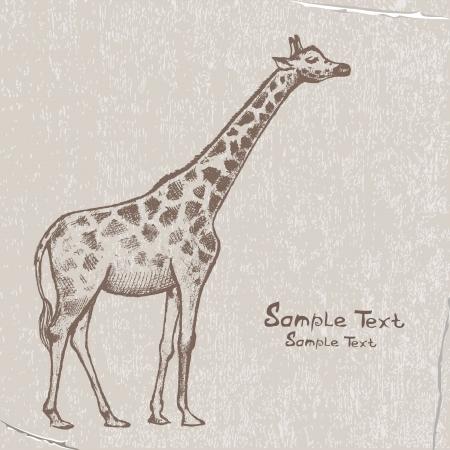 long neck: picture Giraffe Art Illustration