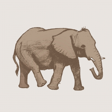 Elephant Art drawing Vector