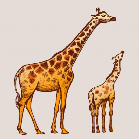 giraffe frame: picture Giraffe Art Illustration