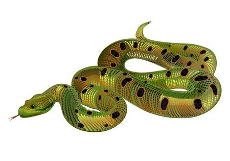 serpiente de cascabel: Beautiful realista serpiente verde Vectores