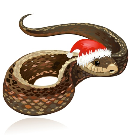 Beautiful snake in santa hat Vector