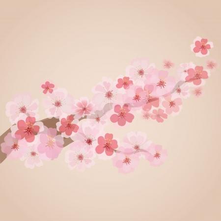 fleur de cerisier: cerisiers en fleurs