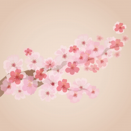 cherry trees: cherry blossoms  Illustration