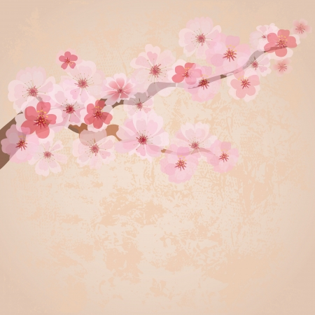 spring in japan: cherry blossoms on paper grunge Illustration