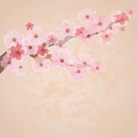 arbol cerezo: flores de cereza en papel del grunge Vectores