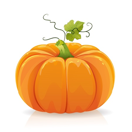 large pumpkin: Pumpkin Illustration