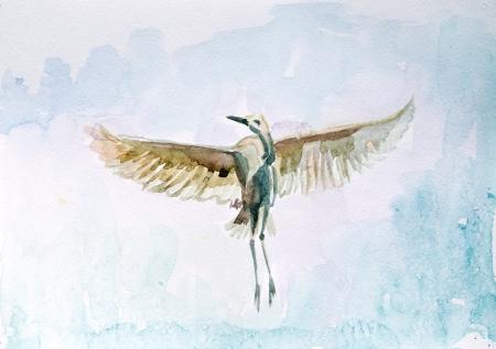 wet flies: Watercolor drawing of a bird in flight