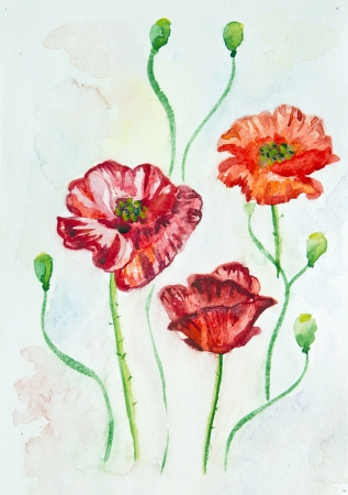 Watercolor poppies photo