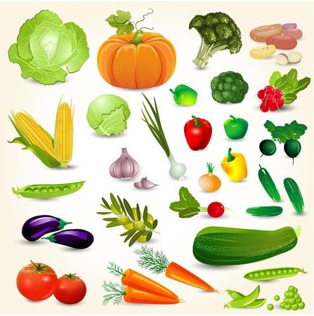 Set van verse groenten voor uw ontwerp Vector Illustratie