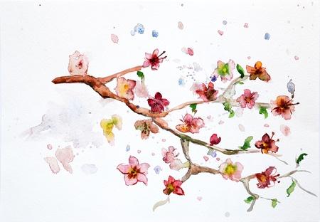 watercolor cherry blossom photo