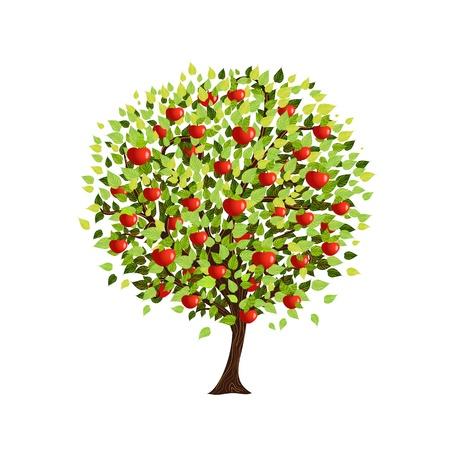 arbol de manzanas: Aislado de árboles de manzana para su diseño