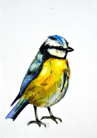chickadee: watercolor drawing of cute bird