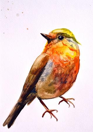 かわいい鳥の図面水彩画 写真素材