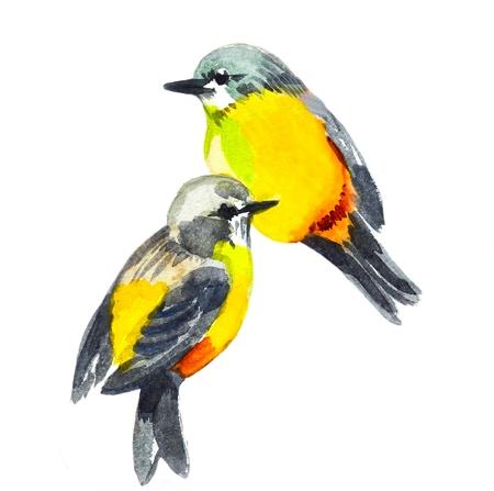 oiseau dessin: dessin aquarelle de l'oiseau mignon