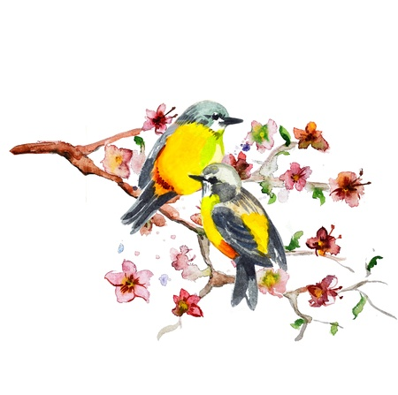 uccelli su ramo: disegno ad acquerello di uccello carino