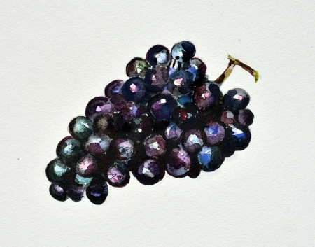 watercolor grapes photo