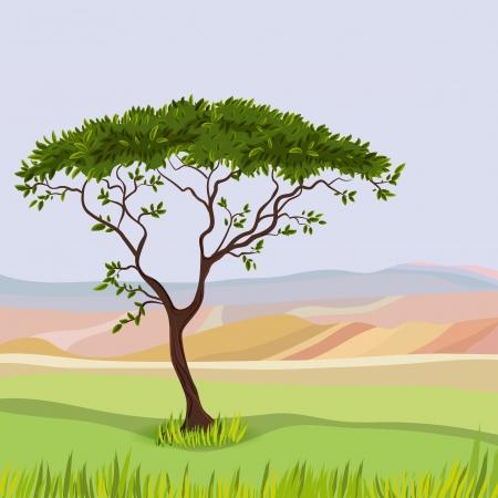 acacia: Mountain idealistic natural landscape