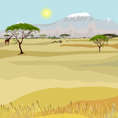 acacia: African Mountain idealistic landscape