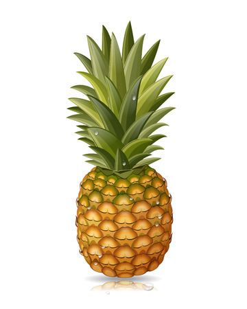pineapples: pineapple isolated