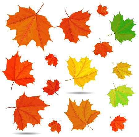 maple leaf Stock Vector - 24893949