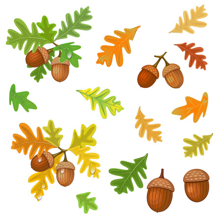 nut trees: Acorn with leaves