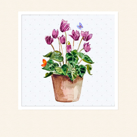 cyclamen: home flowers in a vase. watercolor Stock Photo