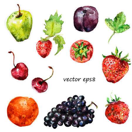 Watercolor fruit for your design. Vector