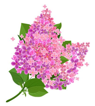 Lilac flower isolated Ilustracja
