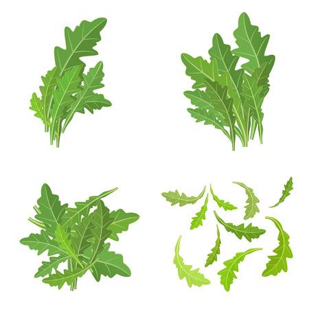 bunch fresh arugula herb isolated set 版權商用圖片 - 30369661