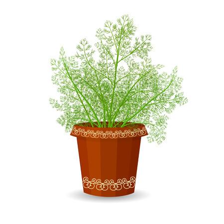 dill: dill in a flower pot