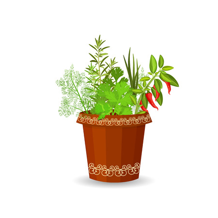 terracotta: herbs and hot pepper in a flower pot Illustration