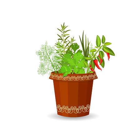 cebollin: hierbas y pimiento picante en una maceta