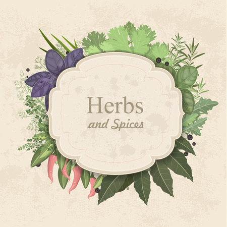 allspice: Vintage card with herbs and spices on paper