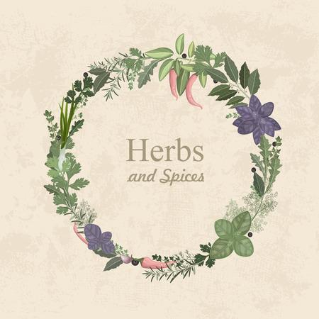 hierbas: Etiqueta del vintage de las hierbas y especias para su dise�o Vectores