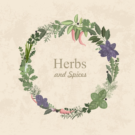 basil leaf: Vintage label of herbs and spices for your design Illustration