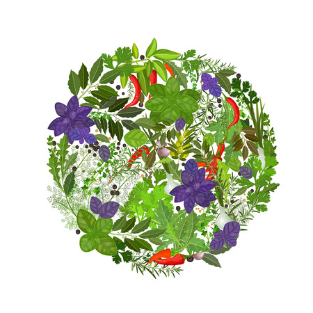 herb garden: herbs and spices on a white background Illustration