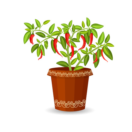 hot pepper in a flower pot