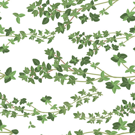 seamless texture of thyme   Vector