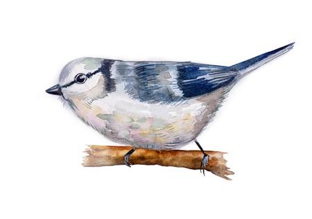 parus: watercolor drawing of bird