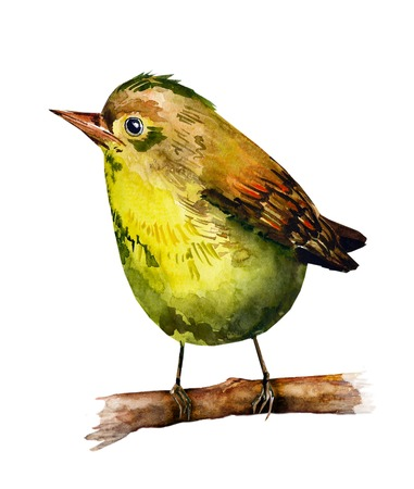 鳥の描く水彩画 写真素材