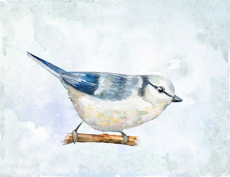 titmouse: watercolor drawing of bird