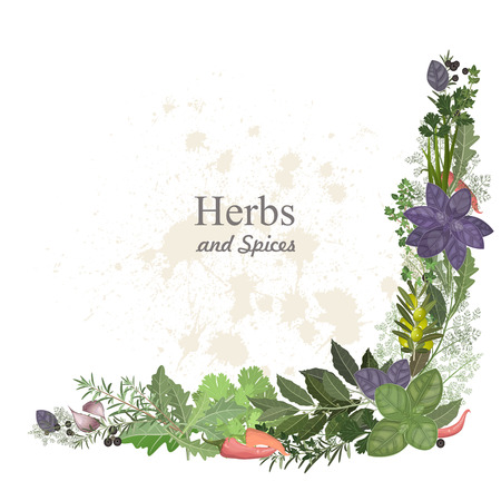 thyme: collection of herbs and spices for you design
